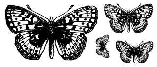 Butterfly Set - web