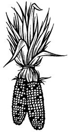 Indian Corn - web